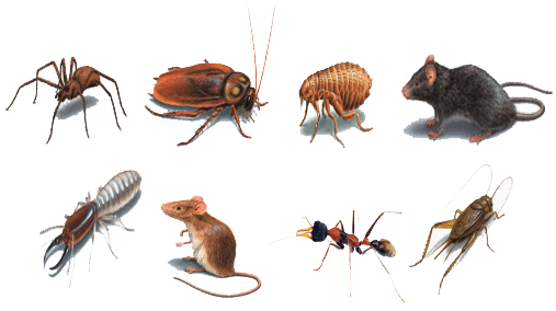 Offshore Support marine industry pest control irradicate all types of pests