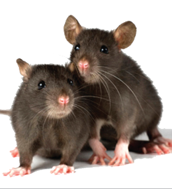 Offshore Support marine industry pest control irradicate rodents